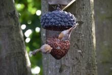 Vogelvoederkorf