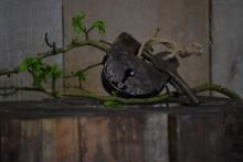 Oud roestig hangslot