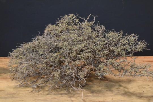 Decoratie tak desert bush