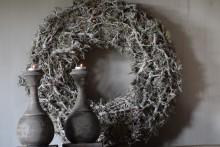 Krans grey  moss bonsai
