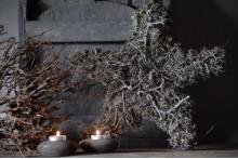 Star grey moss and bonsai