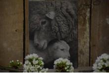 Kaart schaap met lam